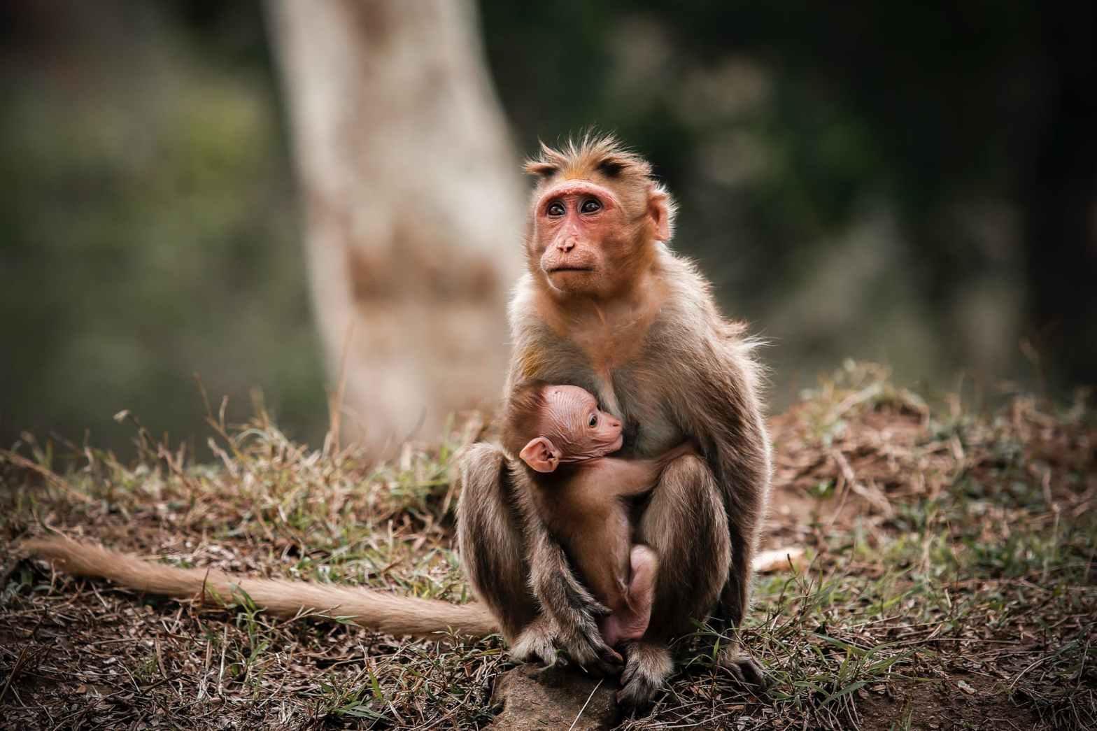 monkeys sitting on ground near tree